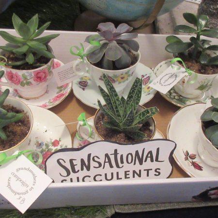 Market2019 succulents